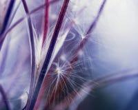 Seeds of Sally closeup Stock Images