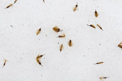 Seeds on snow Royalty Free Stock Photos