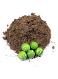 Seeds and soil Stock Images
