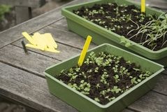 Seeds sowing. For own garden Stock Image