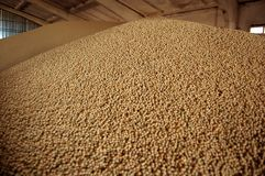 Seeds of soya Stock Photos