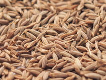 Seeds of spices for backgrounds. And textures Royalty Free Stock Photography