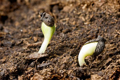 Seeds in springtime Stock Photo