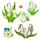 Seeds, stages of growth and wilting white flowers Stock Photo