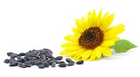 Seeds and  sunflower. Still life.seeds and  sunflower on white background Royalty Free Stock Image
