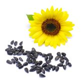Seeds and  sunflower. Still life. seeds and  sunflower on white background Royalty Free Stock Images