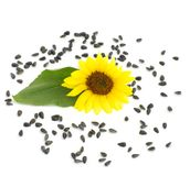 Seeds and  sunflower. Still life black seeds and sunflower with leaf on white Royalty Free Stock Photography