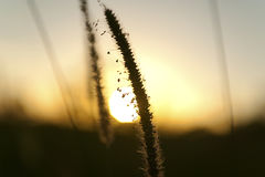 Seeds at sunset Royalty Free Stock Photography