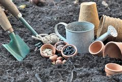 Seeds to sow Stock Images