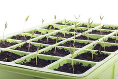 Seeds tray closeup over white Stock Photo