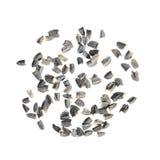 Seeds of upright prairie coneflower or Ratibida columnifera isolated on white background Stock Photo