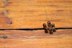 Seeds on wooden floor royalty free stock image