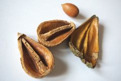 Seeds and wooden hulls Royalty Free Stock Image