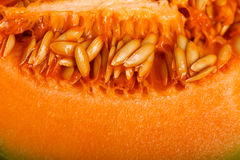 Seeds of yellow melon Stock Images