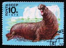 Seeelefant, circa 1978 Lizenzfreies Stockfoto