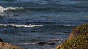 Seeelefant-Vista-Punkt in San Simeon, Kalifornien, ein populärer Markstein entlang Küstenlandstraße 1 stock footage