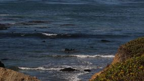 Seeelefant-Vista-Punkt in San Simeon, Kalifornien, ein populärer Markstein entlang Küstenlandstraße 1 stock video