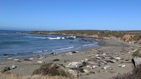Seeelefant-Vista-Punkt in San Simeon, Kalifornien, ein populärer Markstein entlang Küstenlandstraße 1 stock video footage