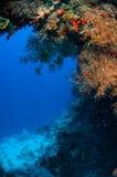 Seefächer Rumphella SP in Banda Indonesien-Unterwasserfoto Lizenzfreie Stockbilder