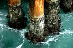 Seefahrwerkbeine Stockfoto