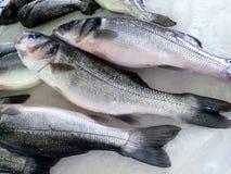 Seefisch in Griechenland auf dem Markt Kaufen Sie Fische reisen Lizenzfreie Stockfotos