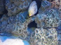 Seefisch innerhalb der Felsenhöhle Stockbilder