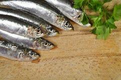Seefisch mit frischer Petersilie Lizenzfreies Stockbild