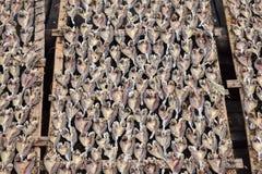 Seefisch werden in der Sonne getrocknet lizenzfreie stockfotos