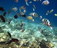 Seefische Unterwasser lizenzfreie stockfotos