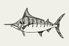 Seefischspeerfisch Zeichnung Lizenzfreies Stockfoto