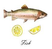 Seeforellenfische mit Zitrone Handgemachte Aquarellmalereiillustration auf einem Weißbuchkunsthintergrund Lizenzfreies Stockbild