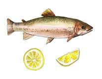 Seeforellenfische mit Zitrone Handgemachte Aquarellmalereiillustration auf einem Weißbuchkunsthintergrund Lizenzfreie Stockfotografie