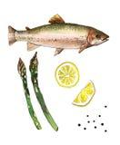 Seeforellenfische mit Zitrone und Spargel Handgemachte Aquarellmalereiillustration auf einem Weißbuchkunsthintergrund lizenzfreie stockfotos
