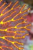 Seegebläse Stockfoto