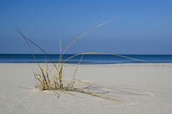 Seegras auf dem Strand Stockfotografie