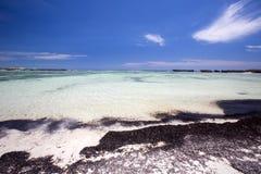 Seegras im Sand auf der Küste, orange Bucht Amoronia, Inder Ocea Lizenzfreies Stockbild