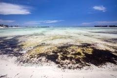 Seegras im Sand auf der Küste, orange Bucht Amoronia, Inder Ocea Lizenzfreie Stockfotos