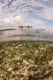 Seegras und Belize-Insel stockfotografie