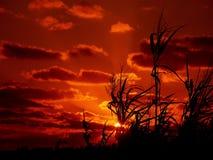 Seegras und Sonnenuntergang Stockfotografie