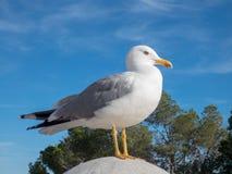 Seegull en el fondo del cielo azul imagenes de archivo