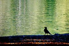 Seeherbstreflexions-Wasservogel Lizenzfreies Stockfoto