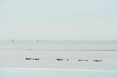 Seehunde im niederländischen Pack Stockbild