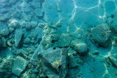 Seeigel auf den Felsen Lizenzfreie Stockbilder