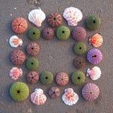 Seeigel und Shells auf nassem Sandfeld Lizenzfreie Stockfotos