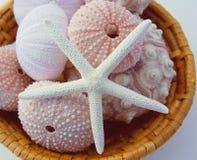 Seeigel und Starfish im Korb Stockbilder