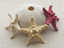 Seeigelschädel mit drei Starfishes Lizenzfreie Stockfotos