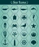 Seeikonen und Symbolsatz Seetiere Seegestaltungselemente Vektor Stockfotos