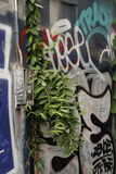 Seeing beyond the obvious. Green plant grows from a concrete wall covered in grafitti Stock Photos
