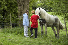 Seeing the Horse. Two children petting a horse over a fence Stock Images