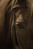 Seeing into your soul. Photo of morgan horse eye stock photos